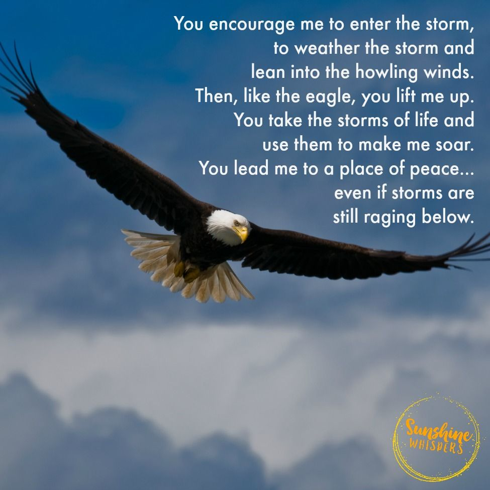 Soaring Above The Storms A Prayer For Focus Eagles Quotes Prayers Inspirational Quotes
