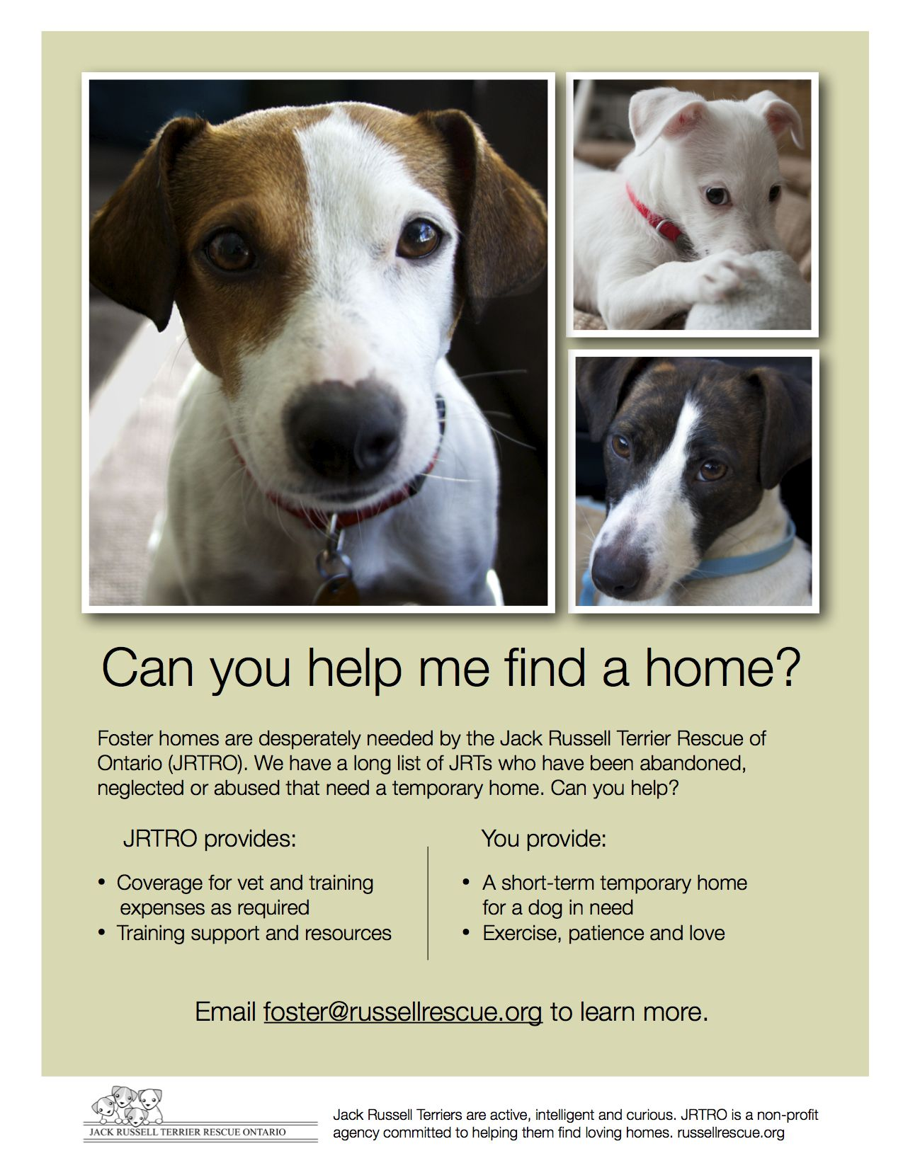 Jack Russell Terrier Rescue Ontario