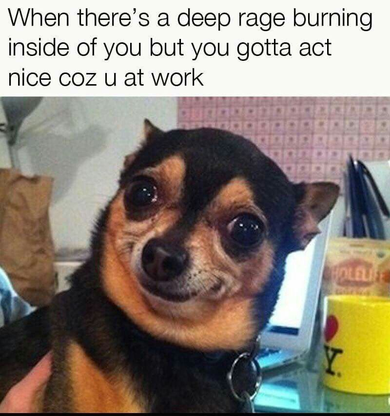 Pin By Patricia Soto On The Other 4 Letter Word Funny Animal Jokes Funny Dog Memes Funny Animal Memes
