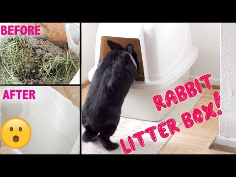 HOW TO CLEAN AND SET UP A RABBIT LITTER BOX! YouTube