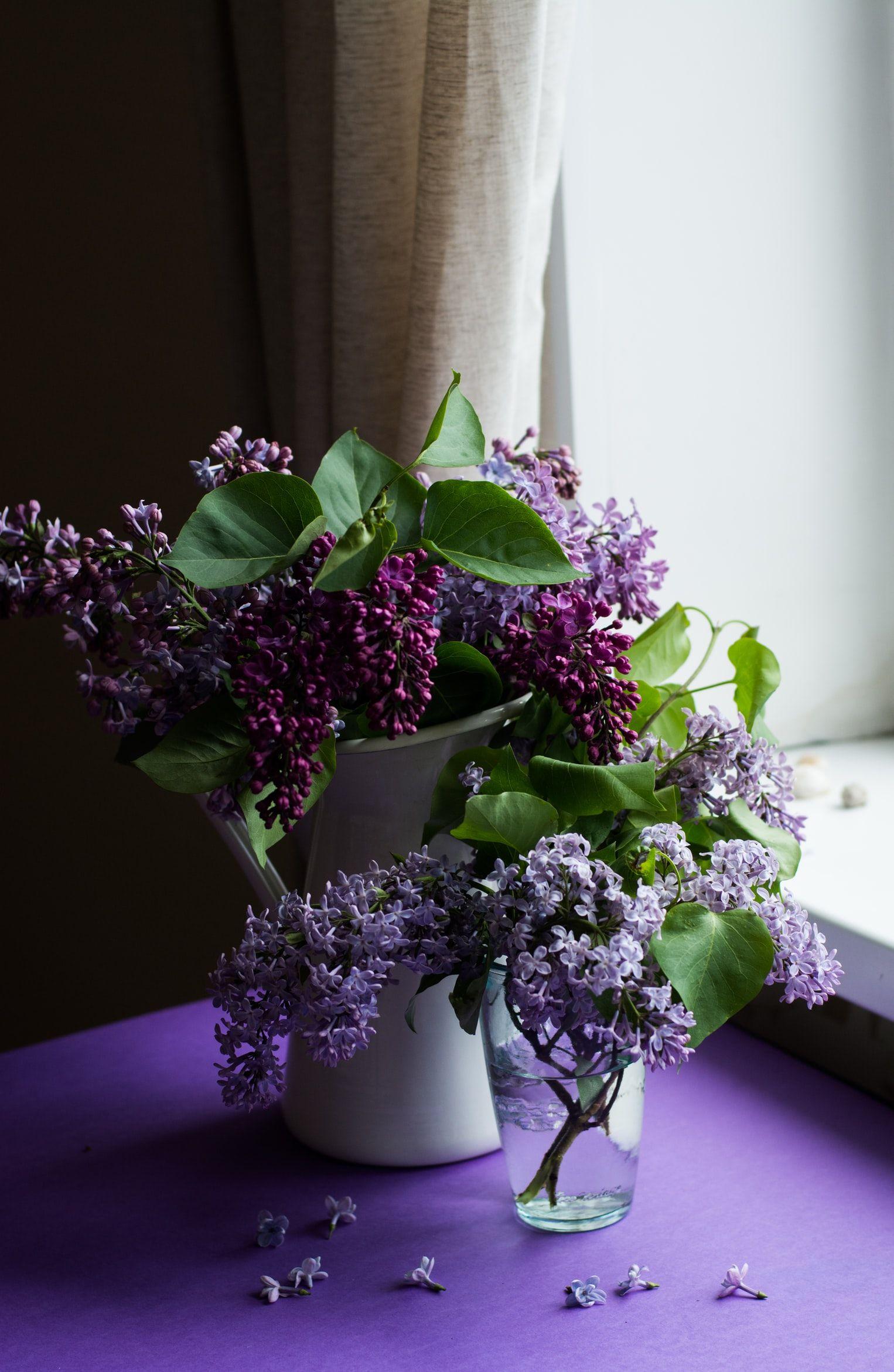 صور 2019 صور انستا صور خلفيات بنات صور سوداء صور جميلة جديدة صور غلاف فيس بوك صورة فيديو Purple Flowers Garden Purple Flowers Purple Flowers Wallpaper