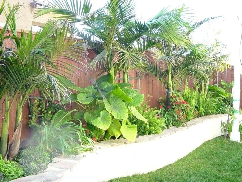 Tropical Landscape Ideas Small Yards Screen Lower House Tropical