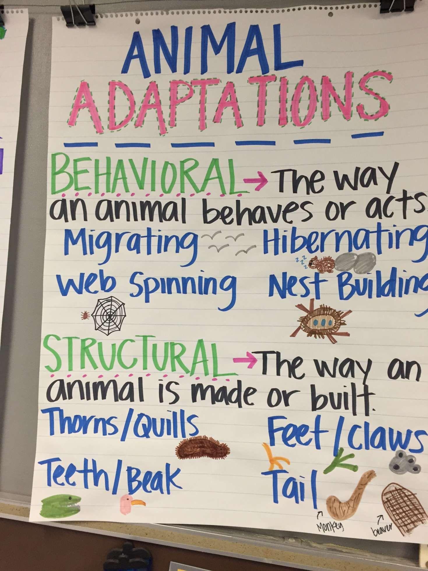 12 Plant Adaptation Worksheets 3rd Grade