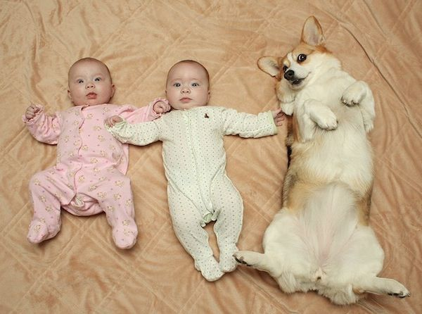 Pin By Shree Mathi On Cute Babies Pinterest Baby Pictures - 30 cutest pictures ever babies posing animals