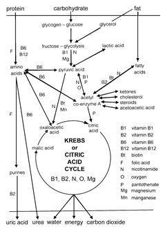 Pin en biochemistry