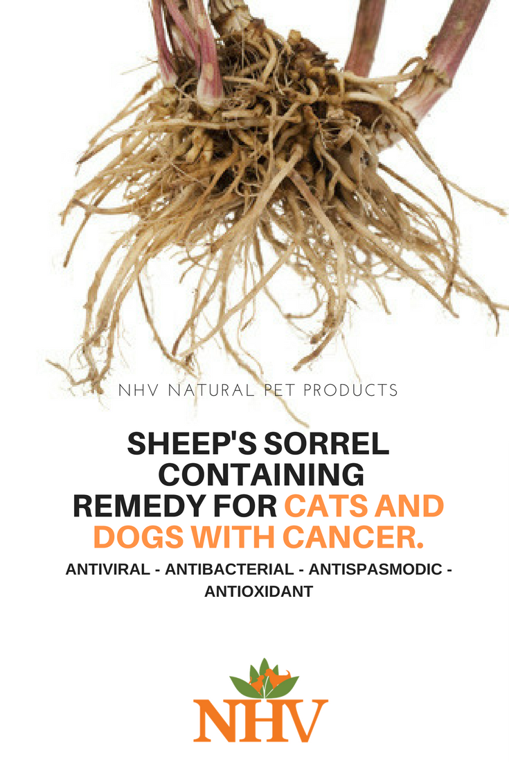 Cancer herbs for dogs - Sheep S Sorrel Root Containing Natural Remedy For Cats And Dogs With Cancer Nhv Es Clear
