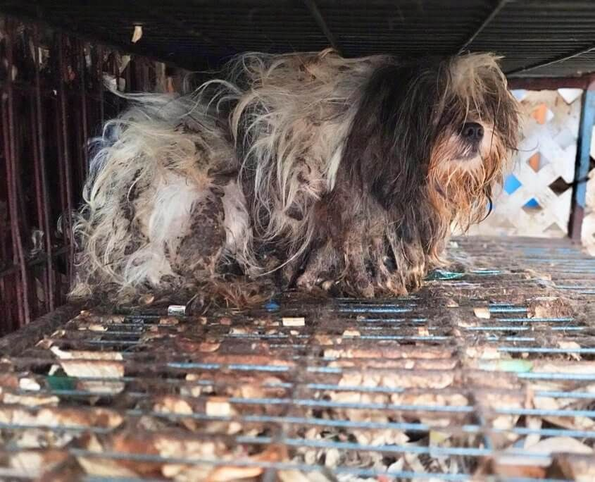 Family Member Calls To Report Horrific Conditions At Property Where Over 60 Dogs Were Found Pet Rescue Report In 2020 Find Pets Animal Rescue Dogs