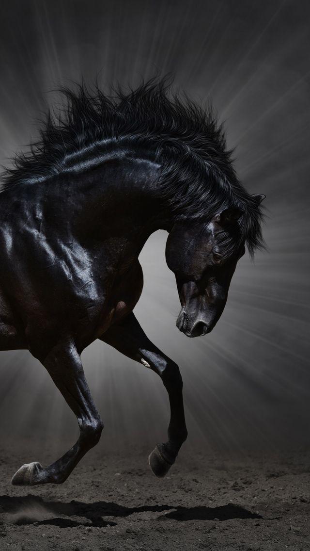 Iphone 5 Wallpapers Horses Pretty Horses Horse Love