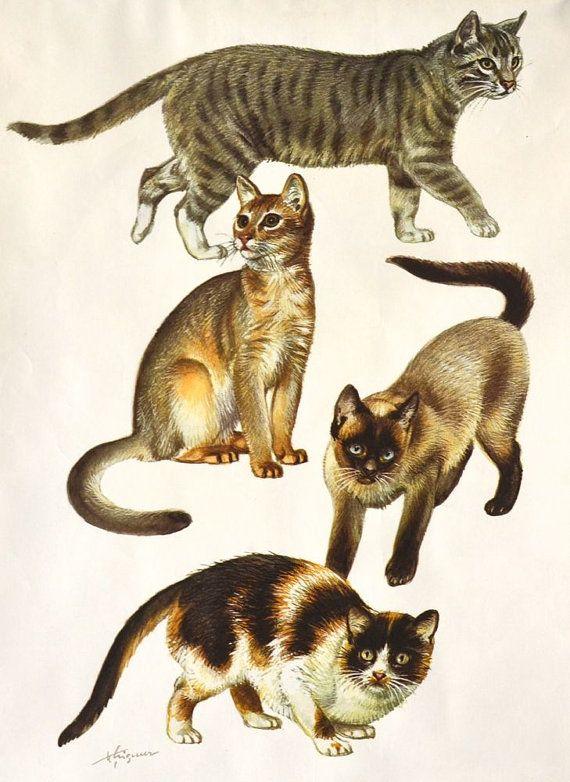 Dein Marktplatz Um Handgemachtes Zu Kaufen Und Verkaufen Cat Obsession Vintage School Vintage Posters