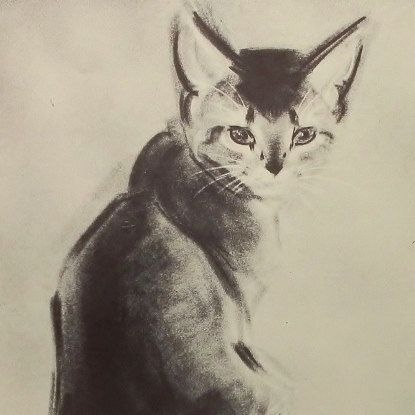 1950s Abyssinian Kitten, Clare Turlay Newberry