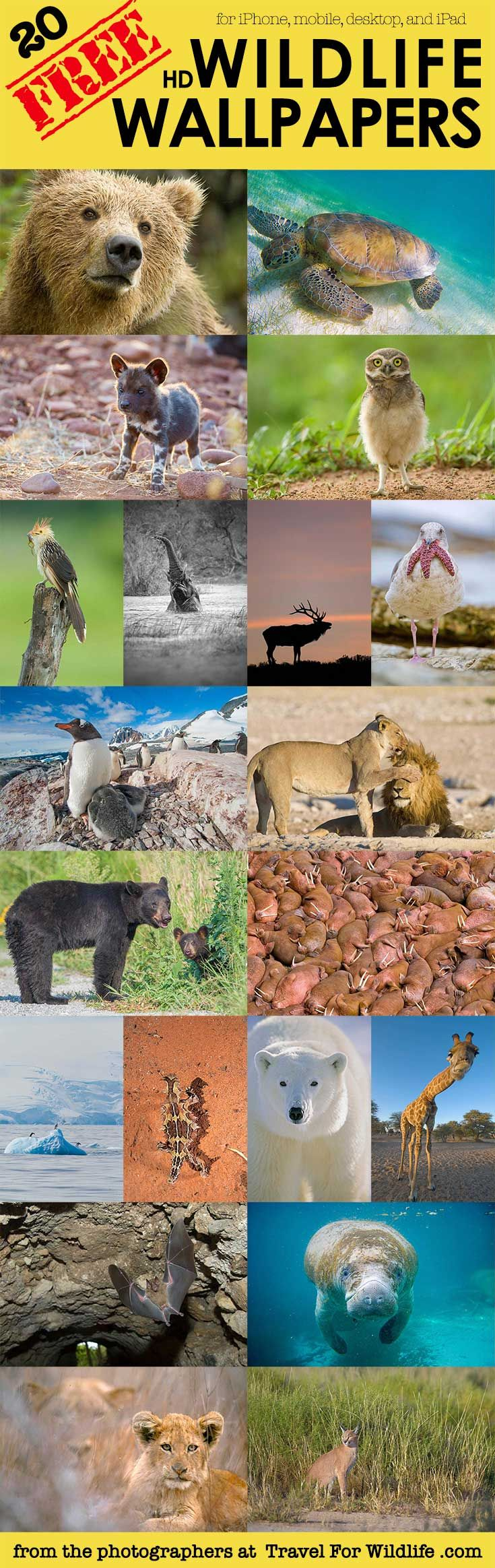 Cool Backgrounds & Animal Wallpapers for Phone and Desktop