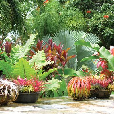 Go Wild With Foliage Tropical Garden Tropical Landscaping Plants