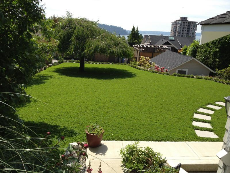 micro clover Lawn alternatives, Seeding lawn, Clover lawn