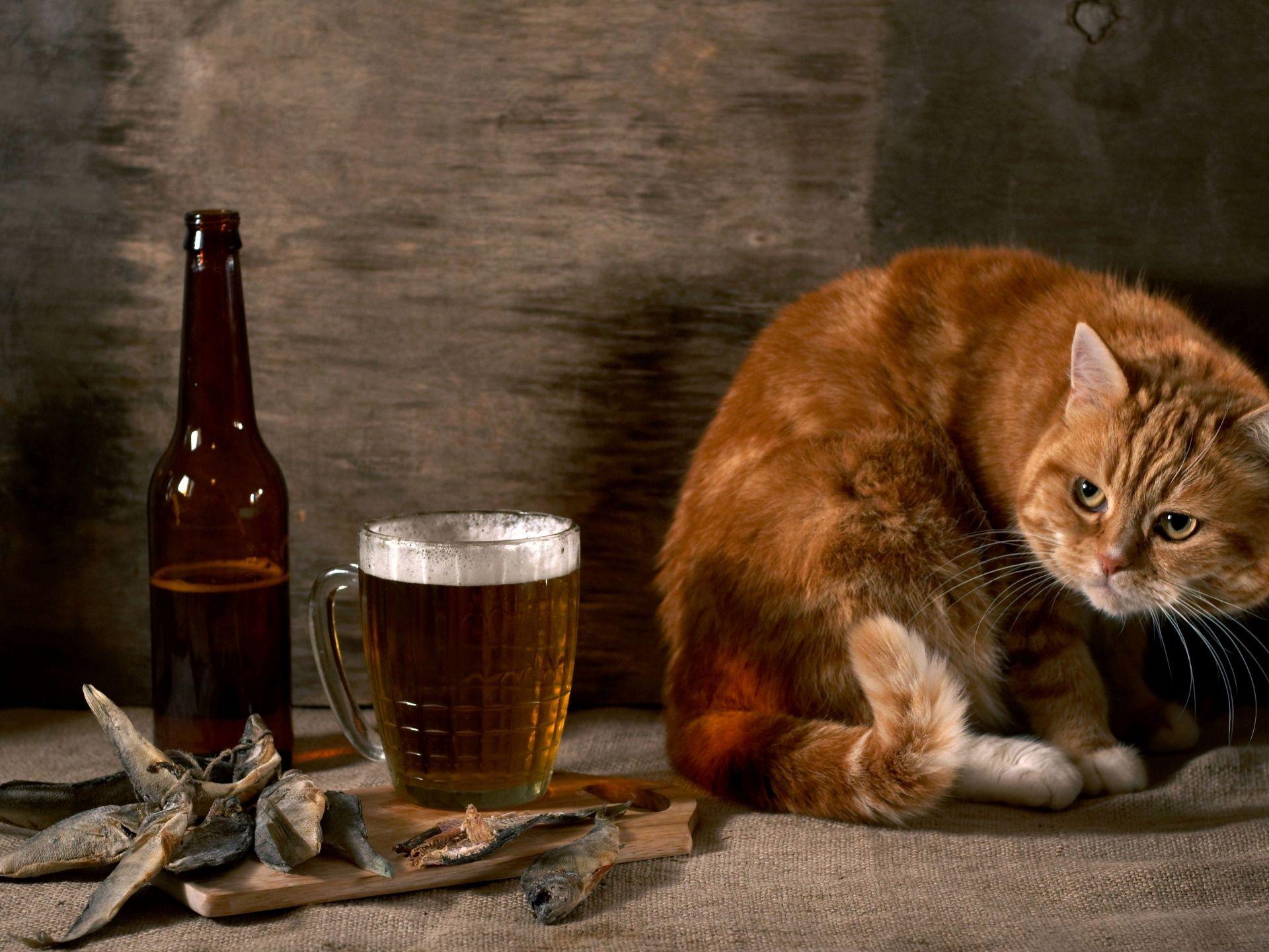 Фото котят алтайского ирбиса оформления