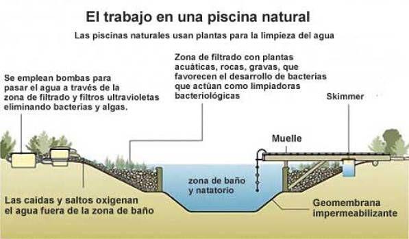 13++ Construir piscina natural ecologica trends