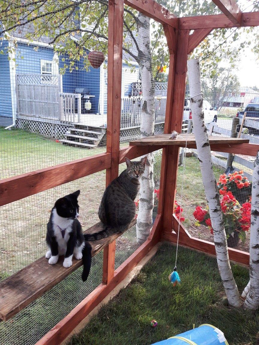 Costruire Lettiera Per Gatti our fur babies love it! | cat enclosure, cat kennel
