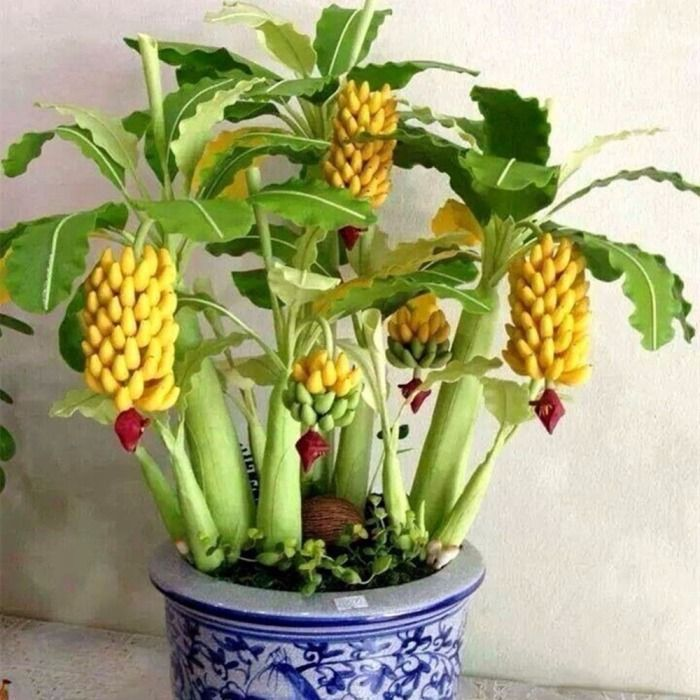 How To Grow Banana Trees In Containers And Dwarf Species