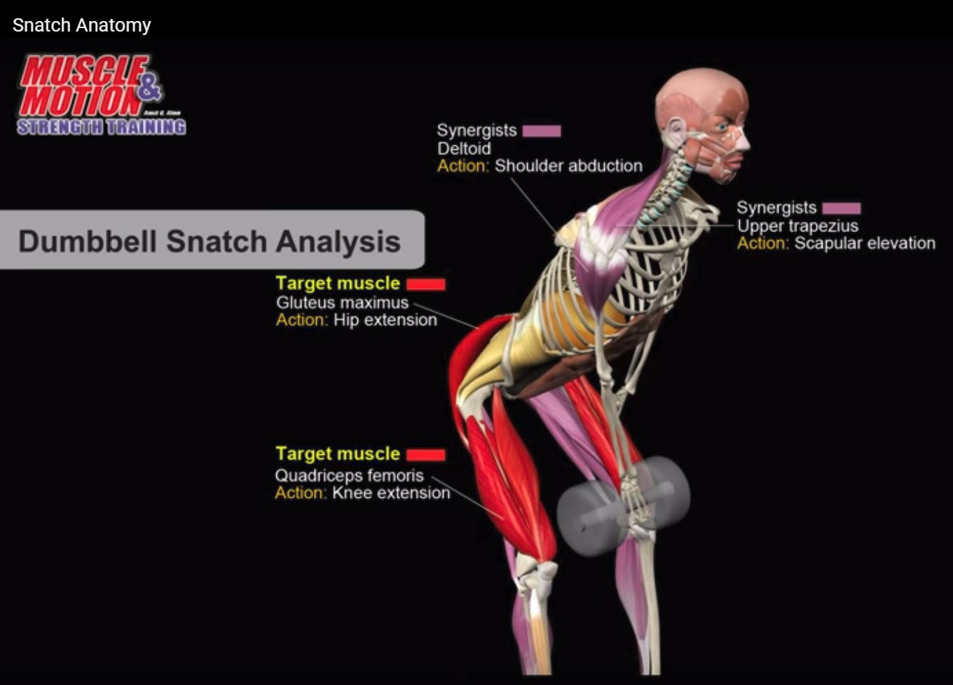 Show trainees which muscles are stimulated during exercise, and illustrate perfect form and technique. Learn crucial nuances for every exercise through our unique library of educational videos.