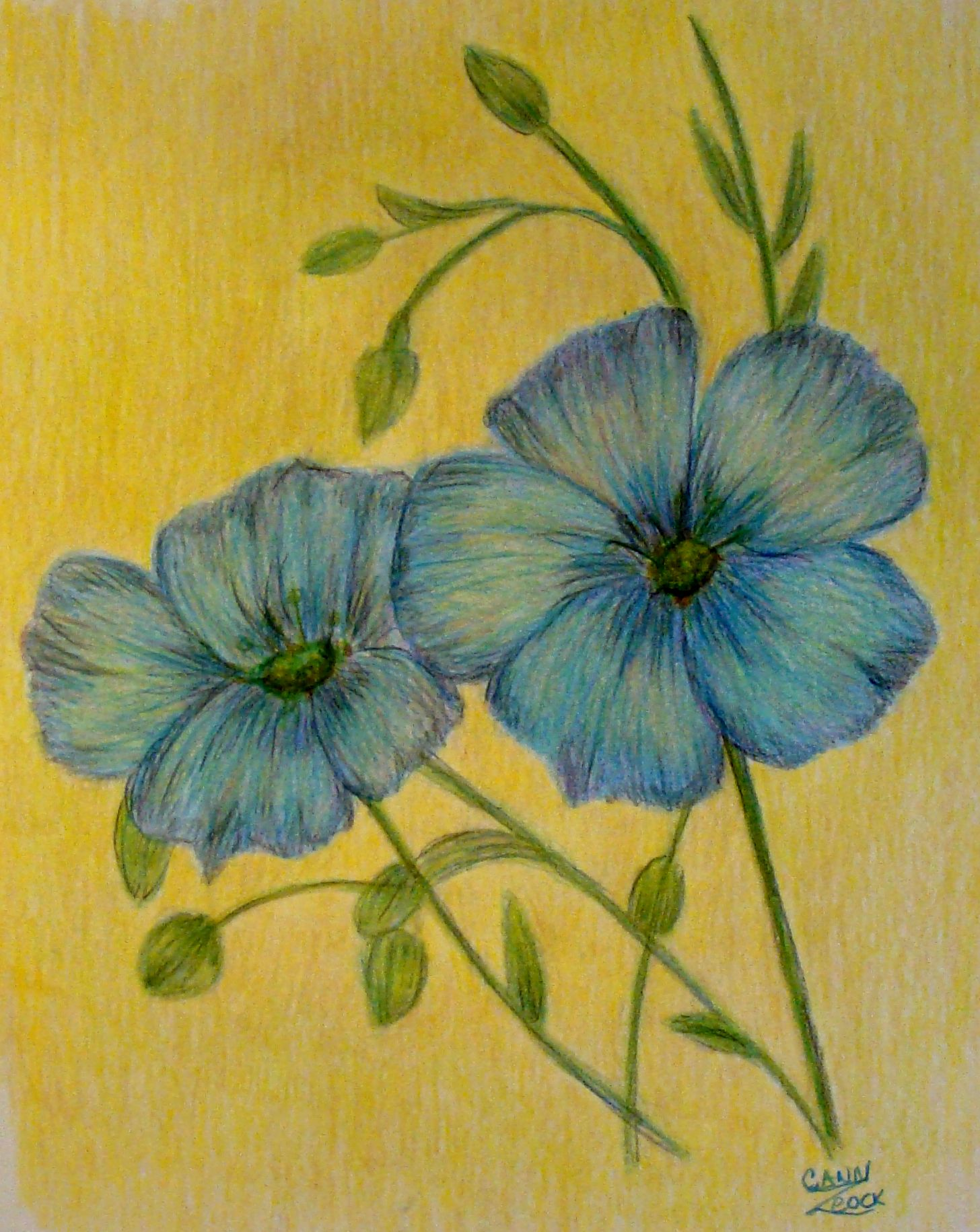 Art colored pencils - Blue Flowers Done In Colored Pencils