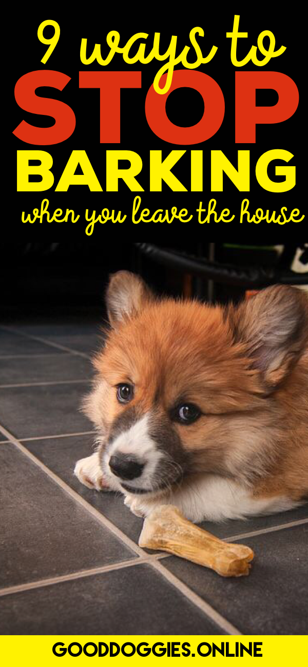 If Your Dog Barks As Soon You Leave Check Out These 9 Training Tips To Get Stop Barking