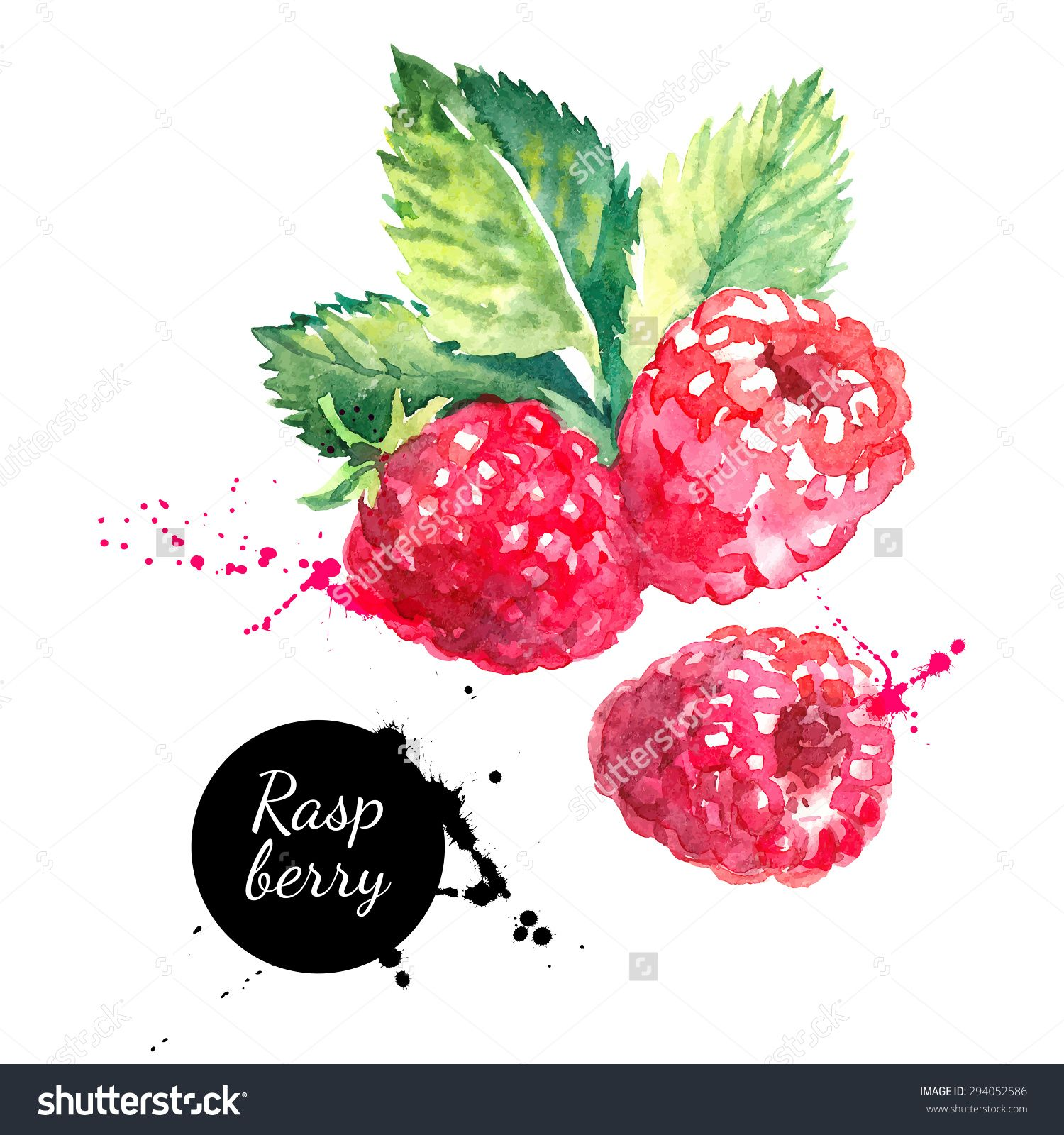 Raspberry Watercolor Cerca Con Google Fruits Drawing
