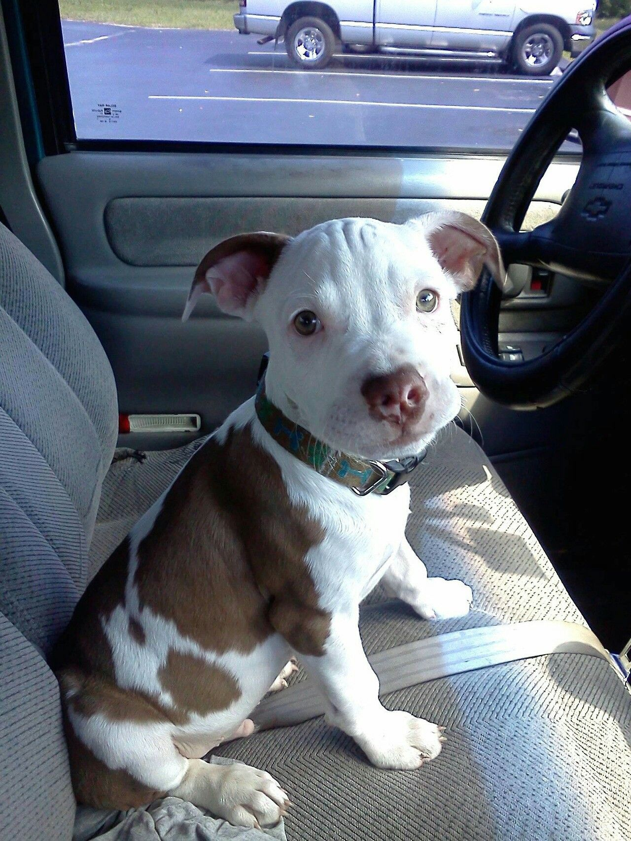 Oh duke always in the driverus seat i miss you gorgeous dogs