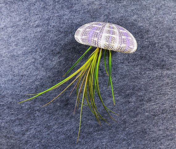 Large Jellyfish Air Plant & Sea Urchin  by BehindThePinesStudio