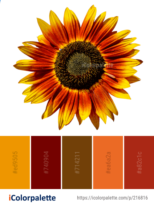 Color Palette Ideas From Flower Sunflower Seed Image Sunflower Colors Red Sunflowers Red Sunflower Wedding