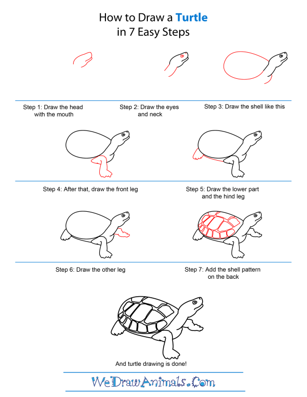 How to draw a turtle step by step how to draw a turtle quick step by step tutorial