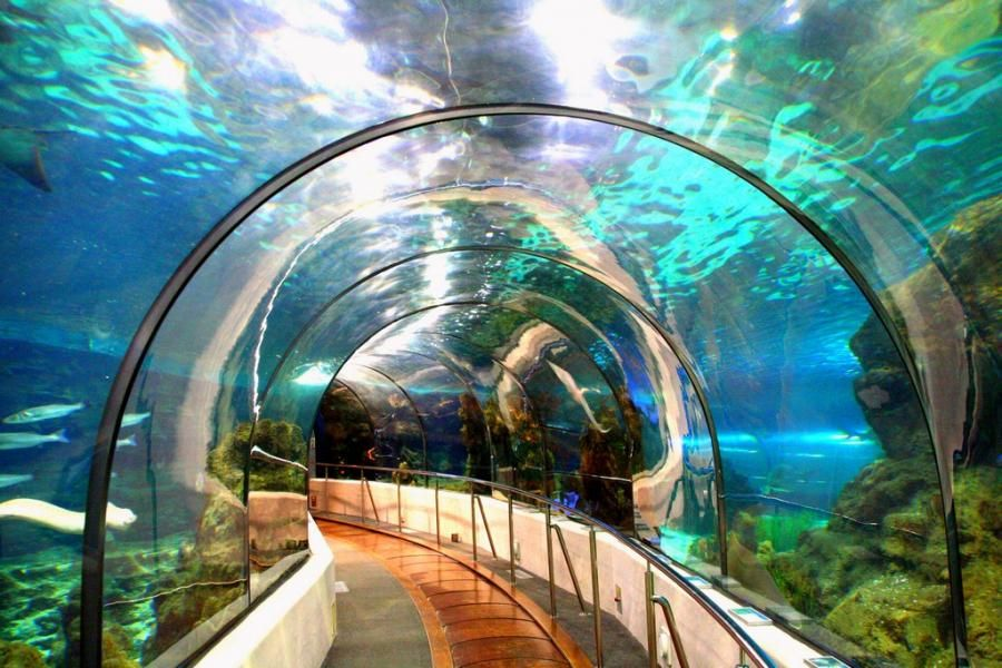 Barcelona Aquarium Pixdaus Places To Visit Barcelona Travel
