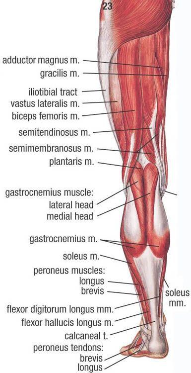 Picture | Estudiar | Pinterest | Anatomía, Medicina y Músculos