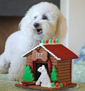 Gingerbread House Tour Christmas Gingerbread House Dog House