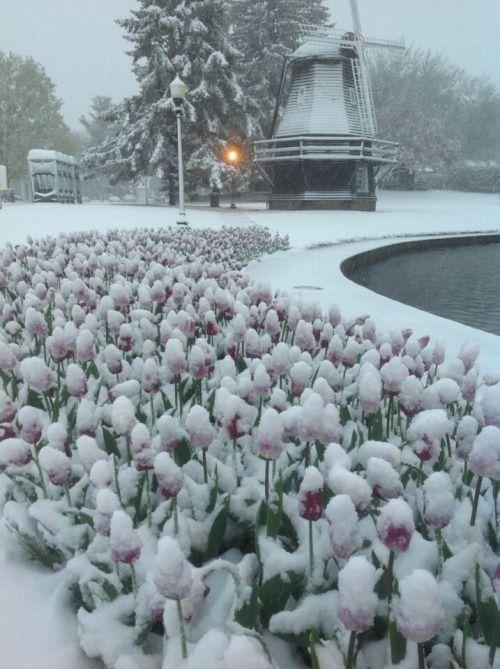 Rain Washed Soul Winter Garden Winter Scenes Winter Scenery