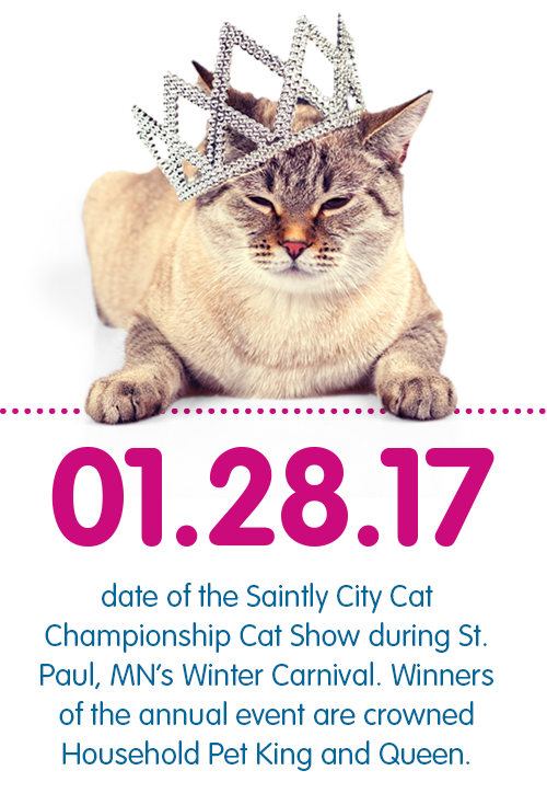 Will You Be Watching The Saintly City Cat Championship Cat Show