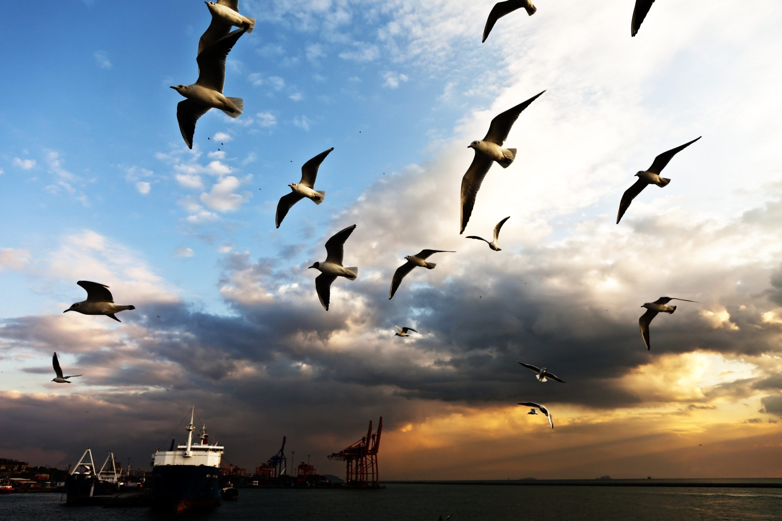 Seagull Photos Google Search Bird Pictures Beautiful Wallpapers Pretty Birds