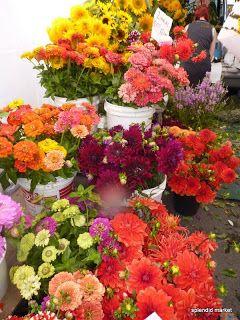 Fall flora:  Zinnias and Dahlias