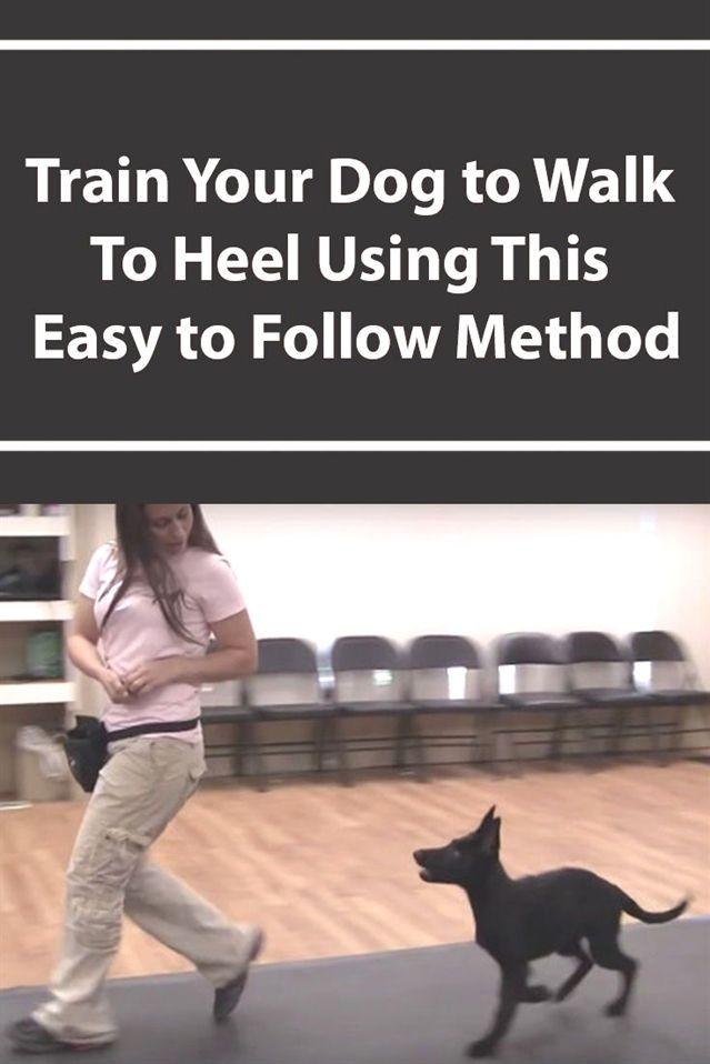 Dog Training Bell To Go Outside Dog Training West Palm Beach