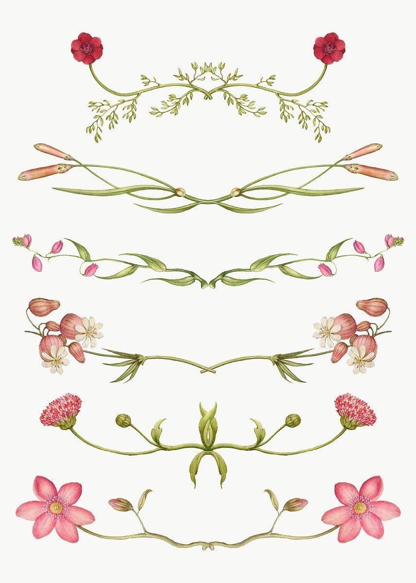 Png Flower Flourish Divider Element Set Remix From The Model Book Of Calligraphy Joris Hoefnagel And Ge Flower Illustration Antique Artwork Free Illustrations