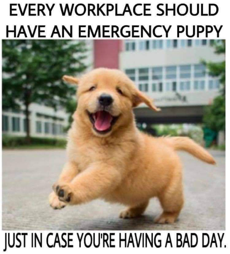 I Would Have A Bad Day Every Day Lol Https Shop Pawtree Com Annette Puppies Dog Memes Happy Dogs