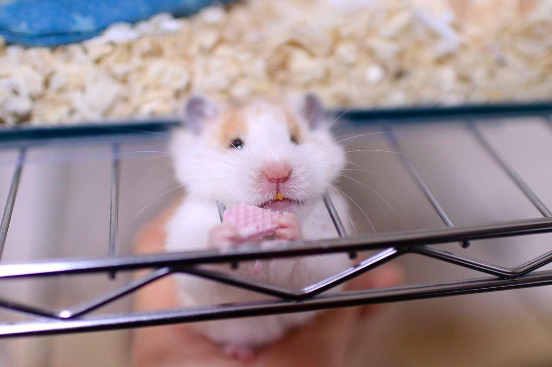 写真の説明はありません Animals Hamster