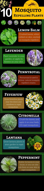 Top 10 Plants That Repel Mosquitoes #plantsthatrepelmosquitoes