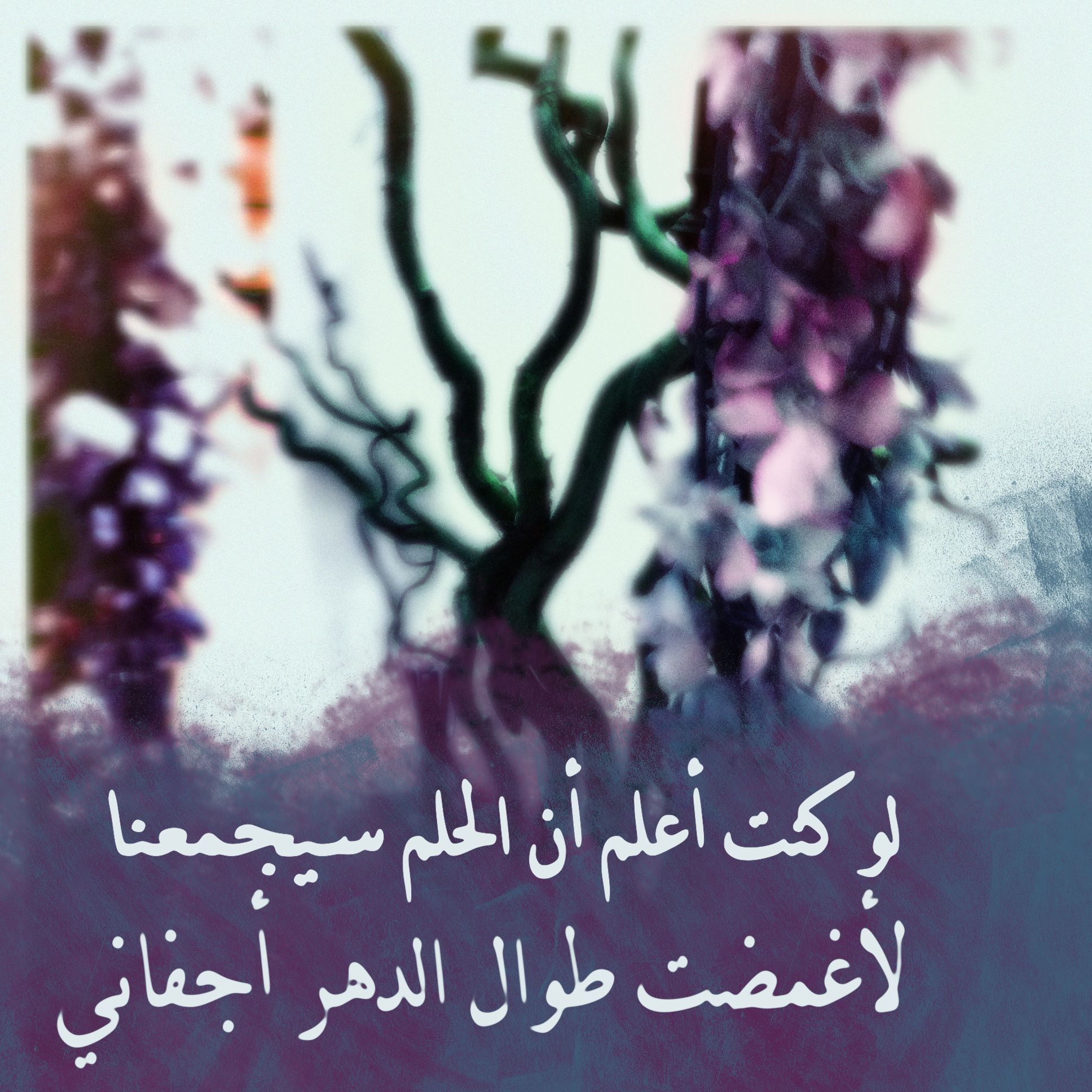 If I Knew That The Dream Will Get Us Together I Would Ve Closed My Eyes Forever Arabic Quotes Pretty Words Arabic English Quotes