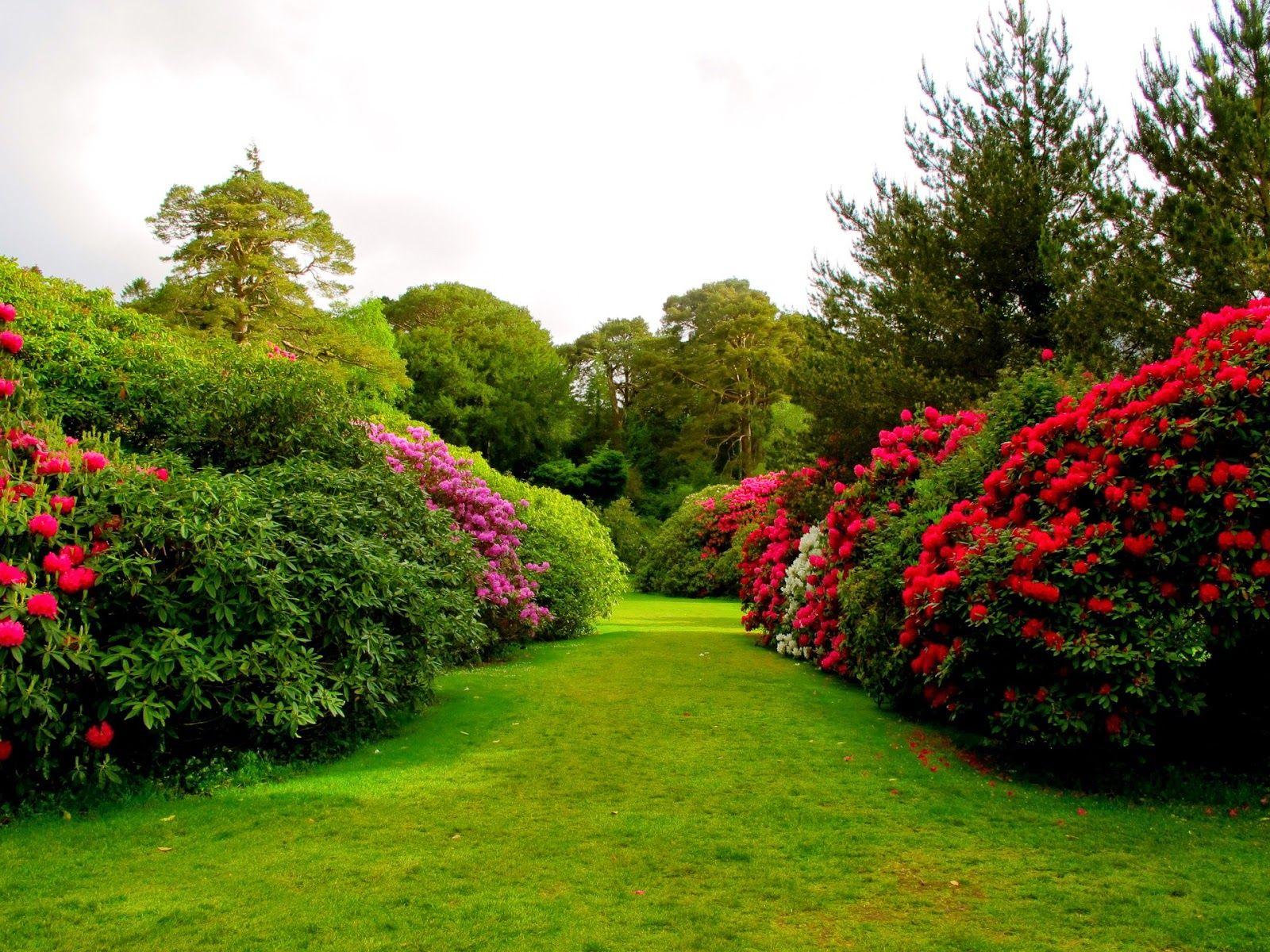 Nature Wallpapers Hd Best Beautiful Mix Beautiful Flowers Garden Garden Pictures Flower Garden Pictures