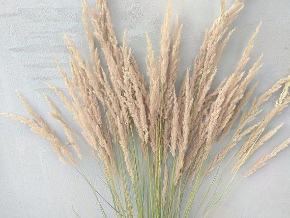 Pampas Grass In Large Vase