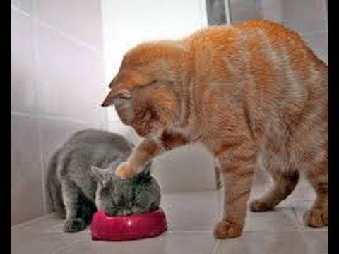 Lustige Katzen Videos Zum Totlachen Katzen Lustig Lustige