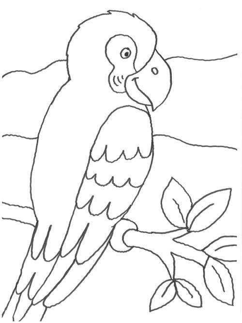 ausmalbilder papagei vögel ausmalen free printables