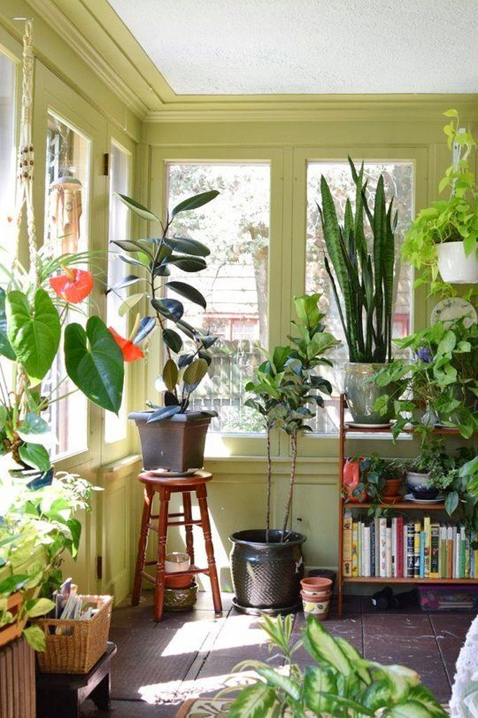 Anthurium Crystallinum Silver In 2020 Anthurium Plant Plants Pretty Plants