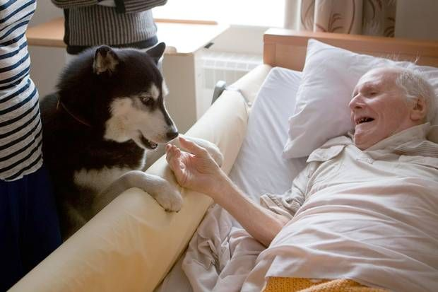 Therapaws: Can animals help to revive memories in the ...