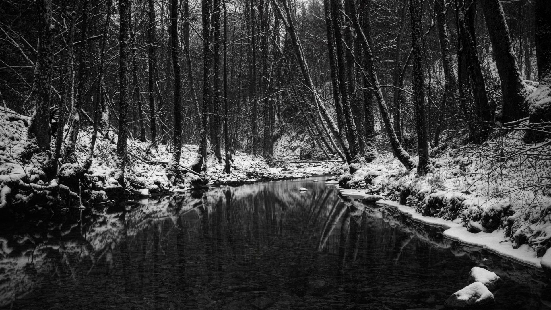 Forest Black And White Wallpapers High Definition Forest Black And White Wallpaper Desktop Dark Wallpaper Winter Wallpaper Black And White Wallpaper