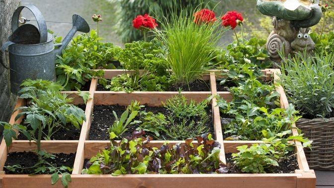 Gemüsebeet Auf Dem Balkon